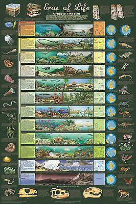 (LAMINATED) ERAS OF LIFE POSTER (91x61cm) GEOLOGICAL TIME SCALE EDUCATIONAL NEW