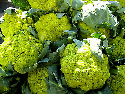 CAULIFLOWER 'Green' 100 seeds vegetable UNUSUAL RARE winter garden HEIRLOOM