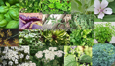 UNUSUAL HERB PACK 22  x PACKETS of herb seeds MEDICINAL CULINARY herbal remedy