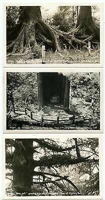 Lot of 3 California's Trees of Mystery Park RPPC by Sawyers #14329