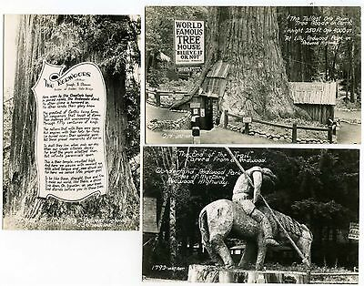 """Lot of 3 California's Redwood Highway """"Trees of Mystery"""" RPPC #14330"""