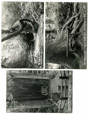 Lot of 3 California's Trees of Mystery Real Photo Postcards #14337
