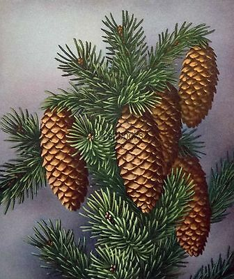 #824 50s Gibson Atmospheric Pinecones- Vintage Christmas Card-Greeting