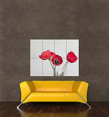 GIANT PRINT POSTER NATURE PHOTO RED TULIP FLOWER PETAL PRETTY PLANT PDC103