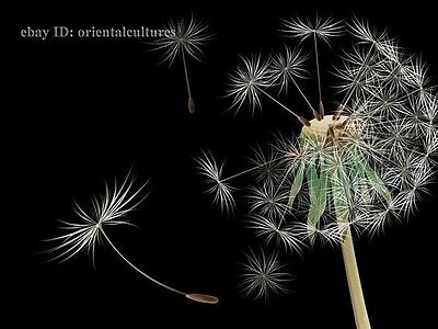 Chinese 100% real natural silk thread,su hand embroidery kits:Dandelion 10inch