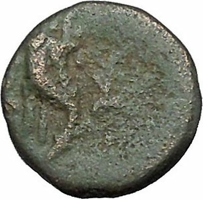 Kaunos in Caria 191BC Ancient Greek Coin Alexander the Great Cornucopia i49020