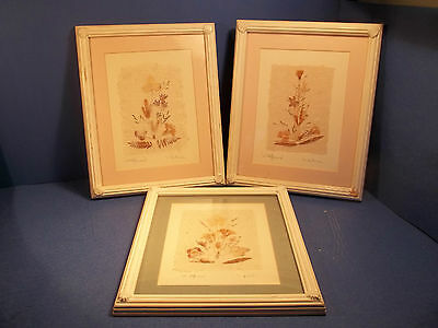 """Wildflowers"" by Interia SET OF 3 BEAUTIFUL DRIED FLOWERS ON HANDMADE PAPER"