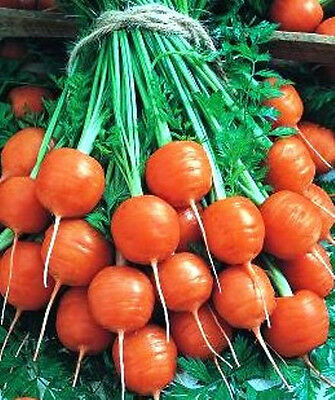 CARROT 'Paris 100 seeds UNUSUAL round MINI winter vegetable garden GOOD FOR POTS