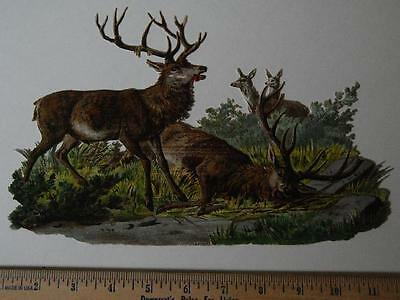 LARGE Victorian die cut, BUCK DEER Fight, to the VICTOR go the DOES