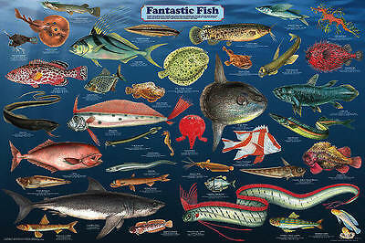 Fantastic Fish (LAMINATED) POSTER (61x91cm) Aquarium Ocean Educational Chart New