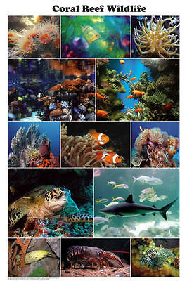 Coral Reef Wildlife (LAMINATED) POSTER (61x91cm) Aquarium Educational Chart New
