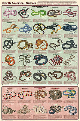 North American Snakes Poster (61X91Cm) Reptile Educational Chart New