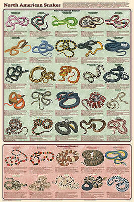 North American Snakes (Laminated) Poster (61X91Cm) Reptile Educational Chart New