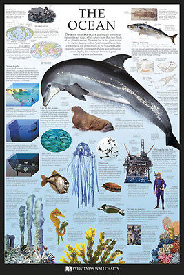 THE OCEAN DOLPHIN POSTER (61x91cm) EDUCATIONAL WALL CHART PICTURE PRINT NEW ART