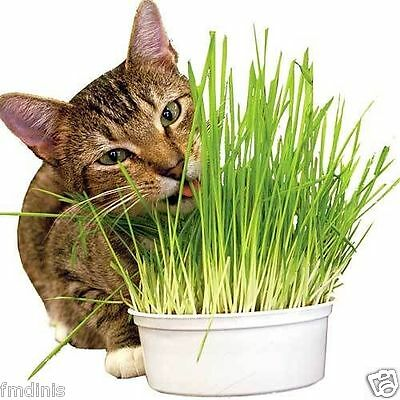 100% Organic Oat Grass for Cats & Pets  400g - Quality Seeds