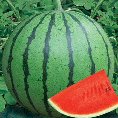 Delicious 10pcs Round Watermelon Seed Plant Fruit Seeds Home Gardening