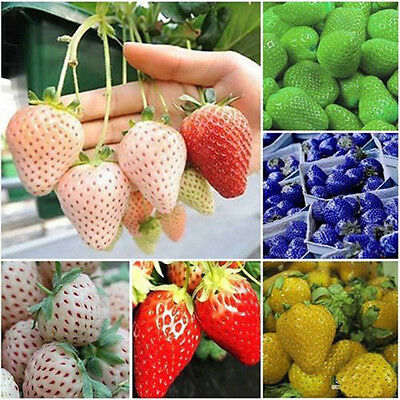 100PCS Strawberry Seeds Nutritious Fruit Vegetables Plant Seed Garden Court New