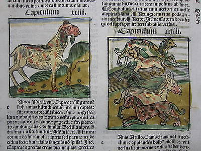 Incunable Leaf Hortus Sanitatis Sheep Dog Ibex Colored Woodcut Venice - 1500