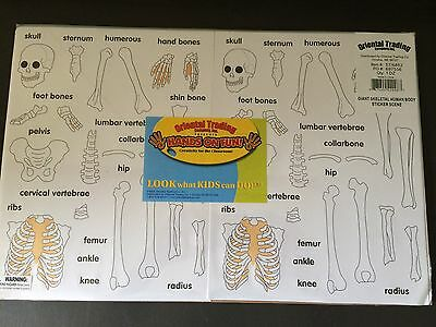 12 Human Skeleton Sticker sheets comes with the 12 body sheets - Sealed set