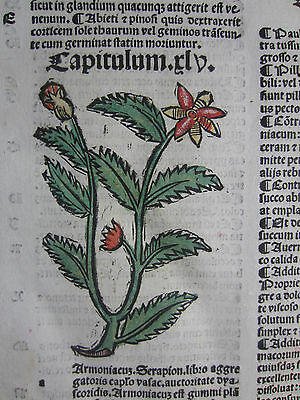 Incunable Leaf Hortus Sanitatis Asant Colored Woodcut Venice - 1500