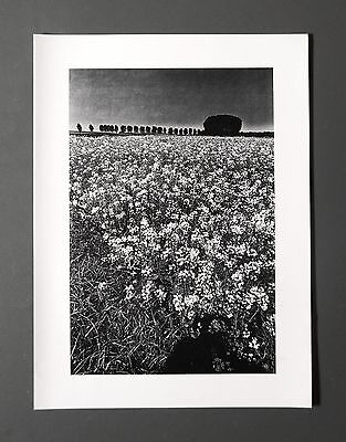 Jeanloup Sieff Original Offset Photo Lithograph 27x37cm Marne la Vallée 1987 B&W