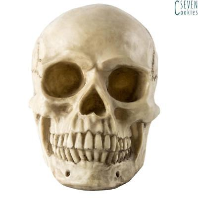 Lifesize Realistic Resin Human Skull Gothic Halloween Party Decoration Ornament