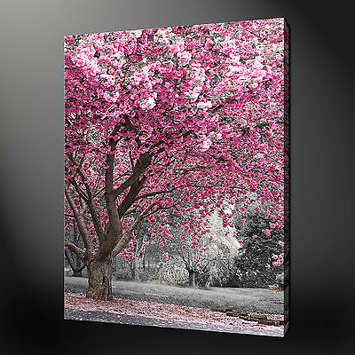 Pink Blossom Quality Modern Canvas Picture Wall Art Ready To Hang