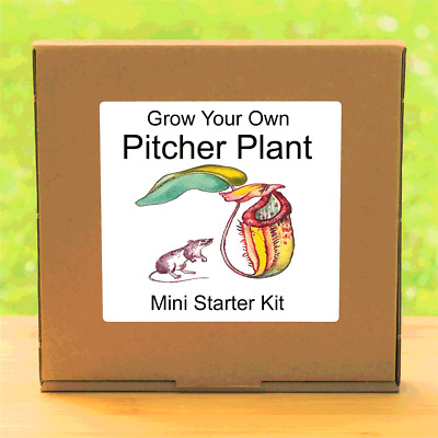 Grow Your Own Carnivorous Pitcher Plant Kit - Unusual Gardening Gift