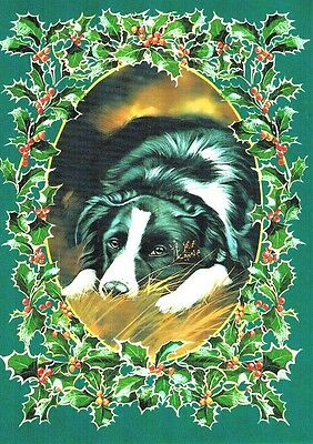 Otter House Border Collie Boxed Christmas Cards