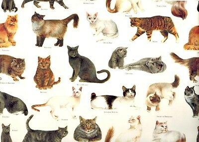 Tassotti Cats Of The World Decorative Gift Wrap Paper - 2 Full Sheets