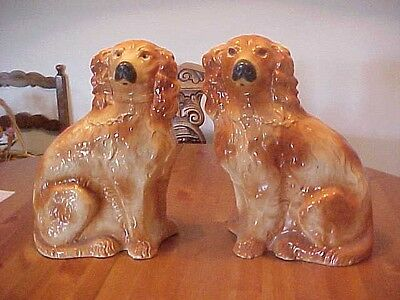 Pair Of Spaniel   Dogs From Ireland Old!