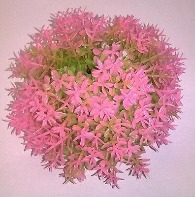Reef One Biorb Pink Topiary Ball Aquarium Decoration 0822728007310