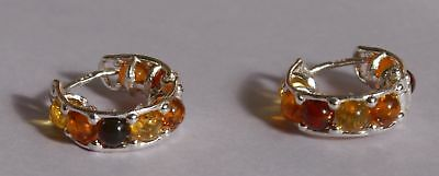 Multicolor Creole  Baltic Amber Earrings on Silver 925