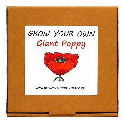 Plant From Seeds & Grow Your Own Giant Poppy Plant Kit