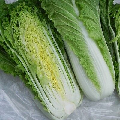 CHINESE CABBAGE - MICHIHILI - 200 FINEST SEEDS  vegetable seeds
