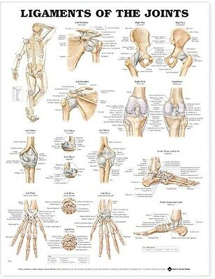 LIGAMENTS OF THE JOINTS (LAMINATED) POSTER (66x51cm) ANATOMICAL CHART NEW