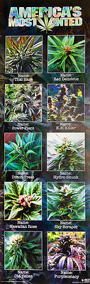 (LAMINATED) Americas Most Wanted Weed POSTER (30x90cm) New Licensed Art