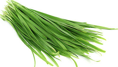 Garlic chives 120 seeds per pack herb vegetable seeds grow your own SALE OFFERS