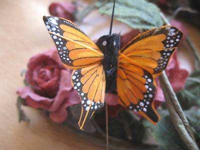 Authentic Small Orange Feather Fantail Butterfly - 5.0cm wingspan - Set of 2