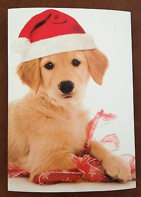 One Golden Retriever With Ribbon & Santa Hat~Christmas Holiday Card