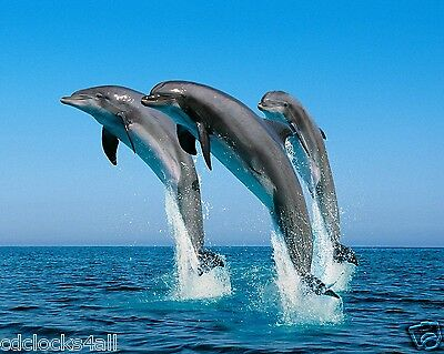 Dolphin / Dolphins 8 x 10 / 8x10 GLOSSY Photo Picture IMAGE #4
