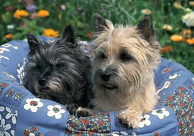 Cairn Terriers  300 Piece Puzzle