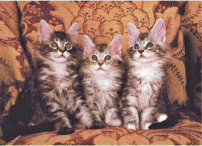 MAINE COON KITTENS  300 Piece Puzzle
