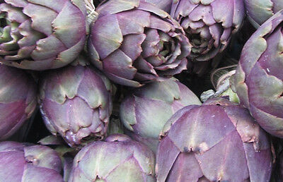 ARTICHOKE 'Purple Headed' 10 seeds vegetable garden UNUSUAL perennial WINTER