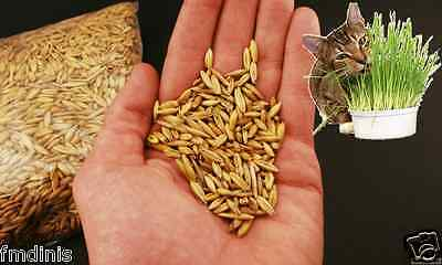 100% Organic Cat Grass & Pets 500g - Helps Digestive Functions.