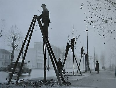 Giancolombo Limited Edition Photo Print 42x32cm Alberi Milano 1949 Cutting trees