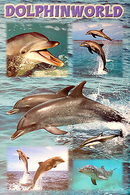 (Laminated) Dolphin World Poster (61X91Cm) Photography New Licensed Art
