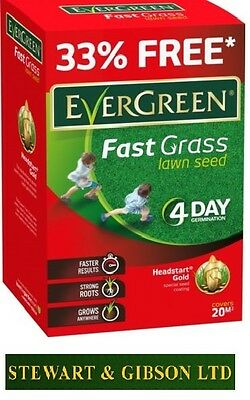 Evergreen Fast Grass Lawn Seed 20m2 33% Extra Free 4 Day Germination 600g