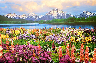 (LAMINATED) GRAND TETON POSTER (61x91cm) LANDSCAPE PHOTOGRAPHY NEW LICENSED ART