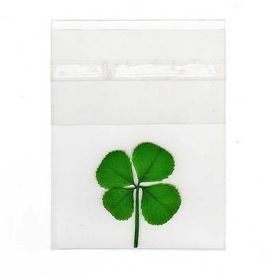 Pressed and Preserved Four Leaf Clover in Cello Sleeve Item CL-4L
